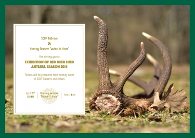 Exhibition of Red Deer shed antlers, season 2018